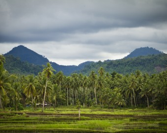 Indo jungle and mountains